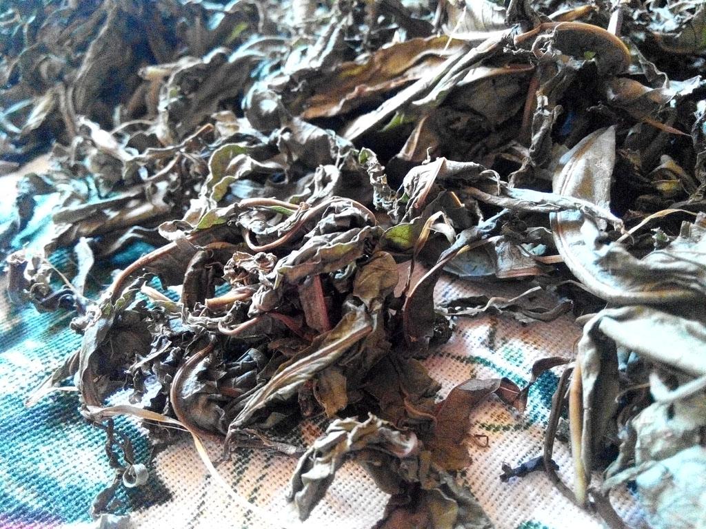 Статья - Ферментация иван-чая (кипрея узколистного), а